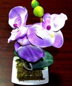 Orhideea fericirii si evolutiei spirituale