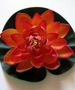 Lotus portocaliu - remediu de dragoste