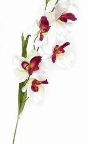 Orhideea dragostei si fericirii