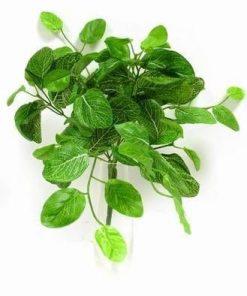 Floare decorativa pentru alungarea energiilor negative